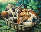 Cesto con funghi - Salvatore Ruggeri - Olio