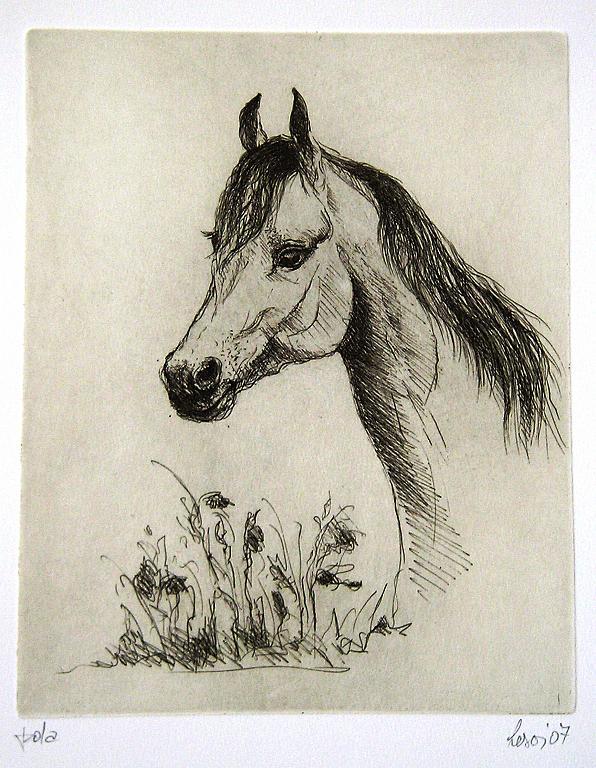 Cavallo - GIUSEPPINA LESA - Acquaforte - 50,00 €