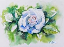 Rosa bianca - Eve Mazur - Acquerello - 55€