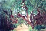 Intreccio arboreo - FAUSTO TRONCI - Olio