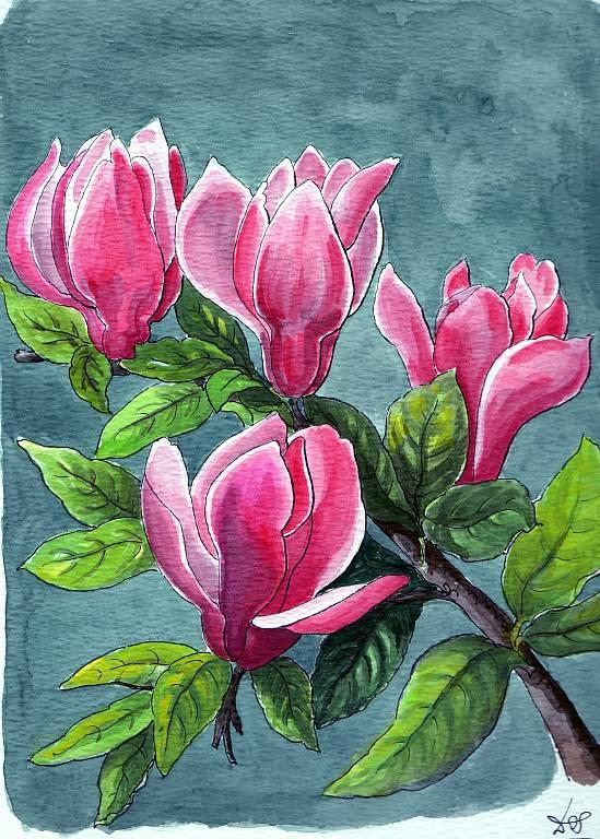 Magnolia Liliflora - silvia diana - china e acquerello - 200 €