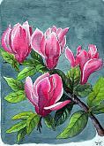 Magnolia Liliflora - silvia diana - china e acquerello - 200€
