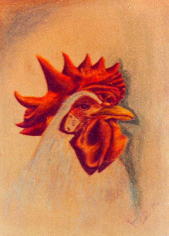 il gallo - daniele rallo - Pastelli