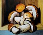 Funghi porcini - Salvatore Ruggeri - Olio
