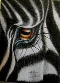 Zebra - anna casu - Carboncino