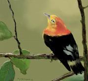L'uccellino canterino - Michele De Flaviis - Digital Art