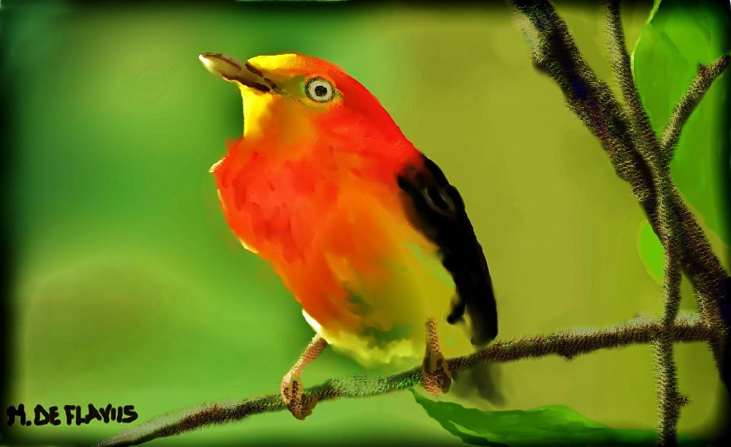 Uirapuru, l'uccellino tropicale che canta come Bach - Michele De Flaviis - Digital Art