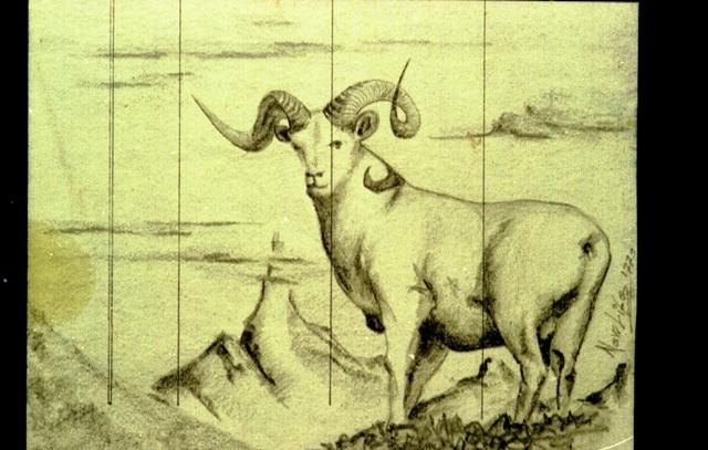 bighorn - daniele Rallo  - matita -  €