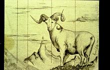 bighorn - daniele rallo - matita - 50€