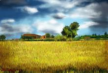 Campo di grano - Michele De Flaviis - Digital Art - 90€
