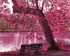 Panchina solitaria - Michele De Flaviis - Digital Art