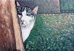 Gatto curioso - Pietro Dell Aversana - Olio - 90 €