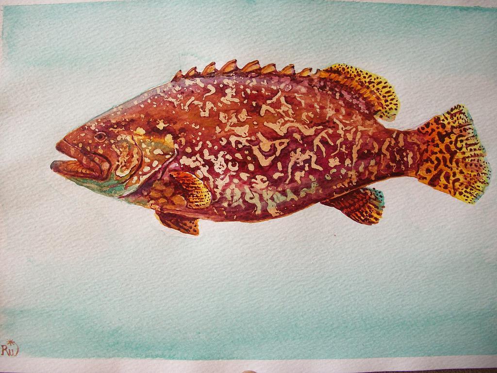 pesce cernia - Ruzanna Scaglione Khalatyan - Acquerello - 65 €