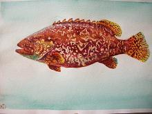 pesce cernia - Ruzanna Scaglione Khalatyan - Acquerello - 65€