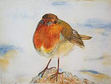 Uccello pettirosso - Ruzanna Scaglione Khalatyan - Acquerello - 43€