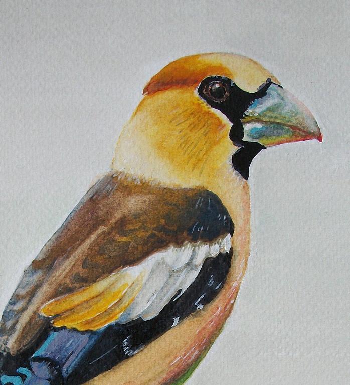 Uccello Frosone - Ruzanna Scaglione Khalatyan - Acquerello - 48 €