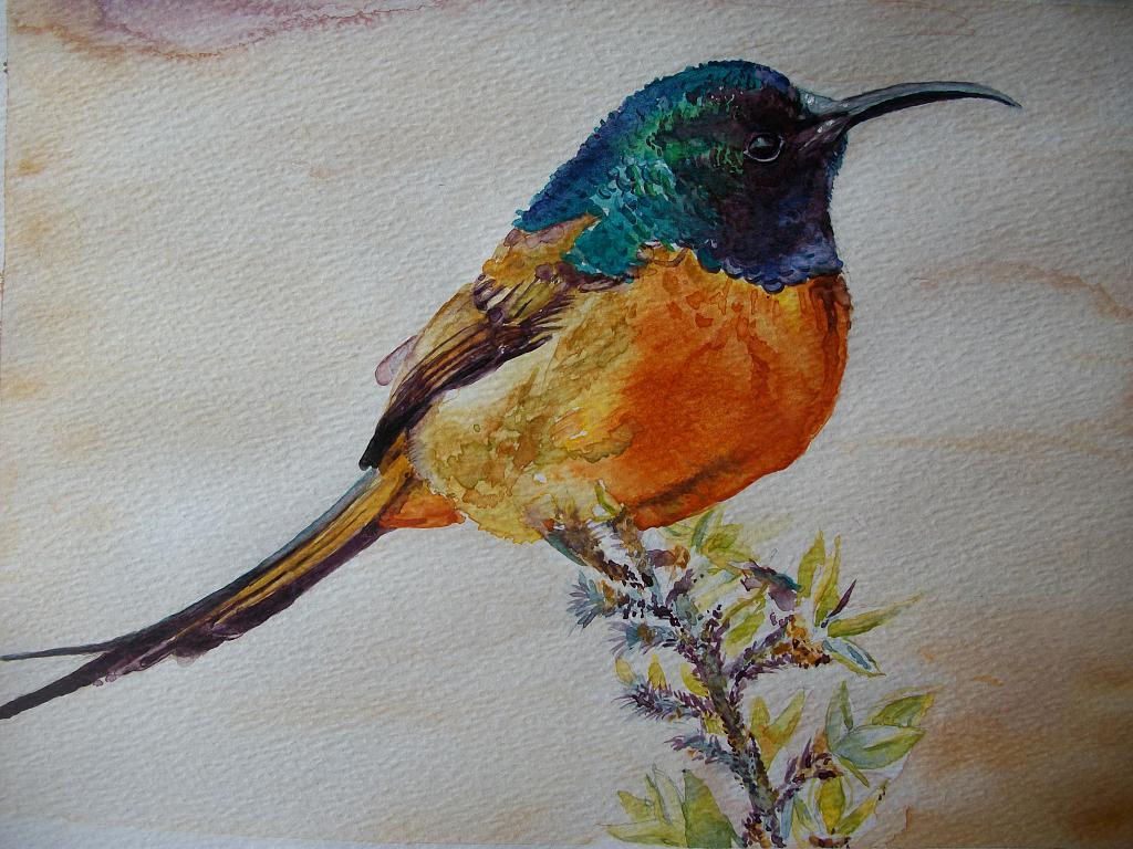 Uccello Colibrì - Ruzanna Scaglione Khalatyan - Acquerello - 73 €