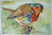 Uccello pettirosso - Ruzanna Scaglione Khalatyan - Acquerello