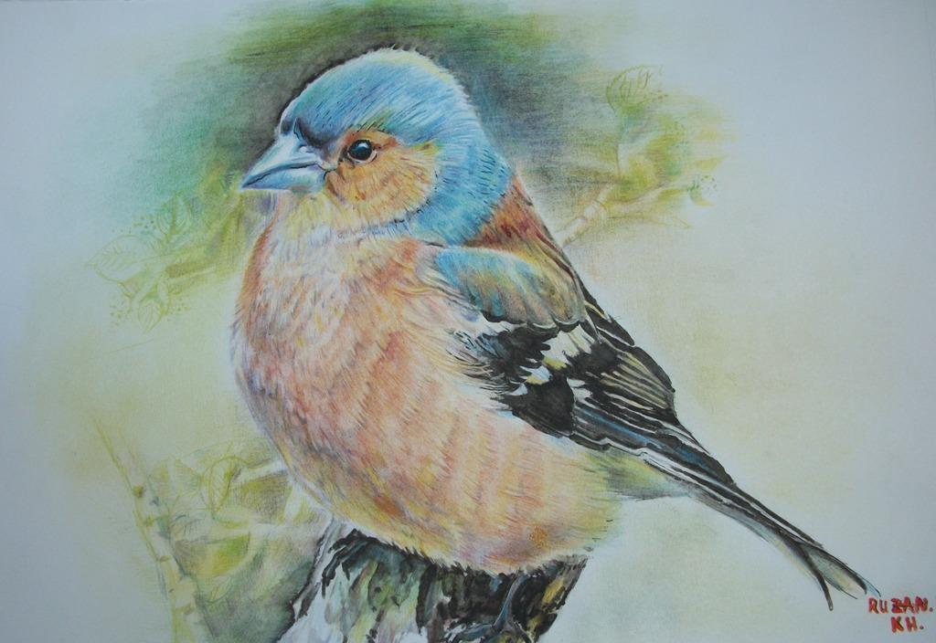 uccello Fringuello - Ruzanna Scaglione Khalatyan - Pastelli - 65 €