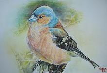 uccello Fringuello - Ruzanna Scaglione Khalatyan - Pastelli - 65€