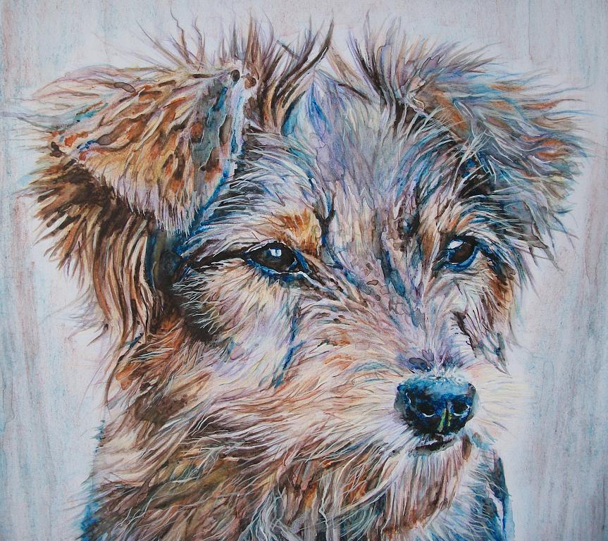 Ritratto cane vagabondo - Ruzanna Scaglione Khalatyan - Pastelli - 55 €