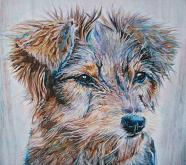 Ritratto cane vagabondo - Ruzanna Scaglione Khalatyan - Pastelli - 55€