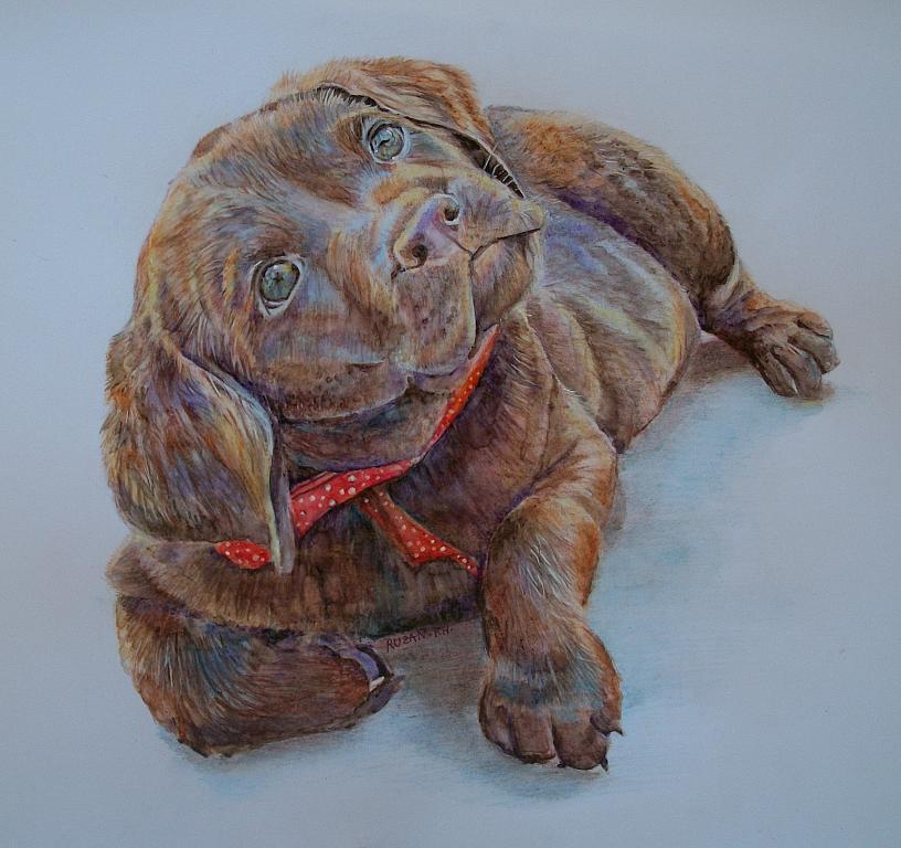 cucciolo labrador  - Ruzanna Scaglione Khalatyan - Pastelli - 75 €