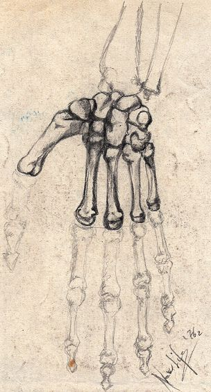 disegni anatomici -la mano- - daniele Rallo  - matita - 30 €