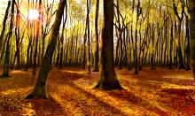 Tappeto di foglie caduche2 - Michele De Flaviis - Digital Art