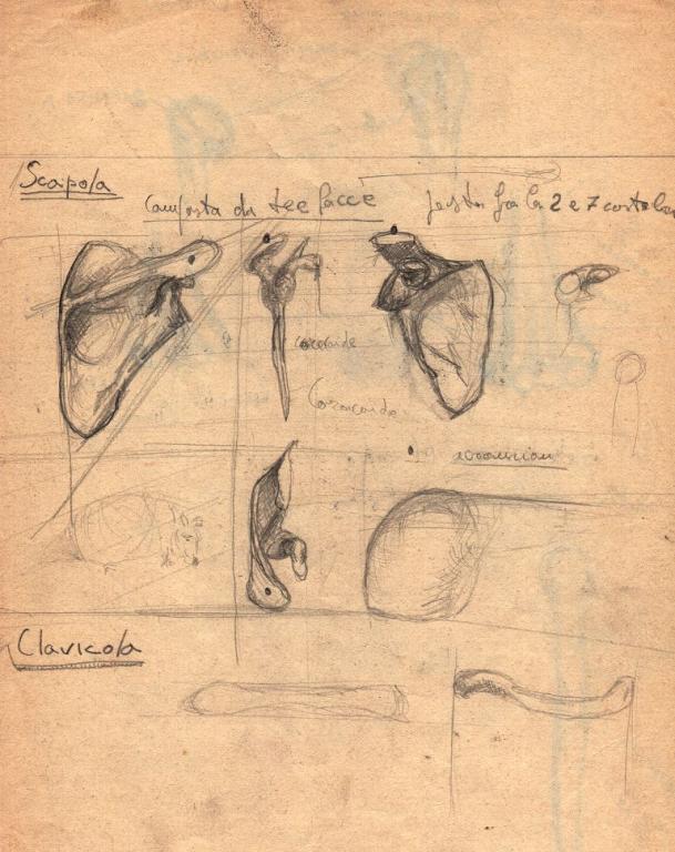 schizzi di anatomia 1 -scapola- - daniele Rallo  - matita