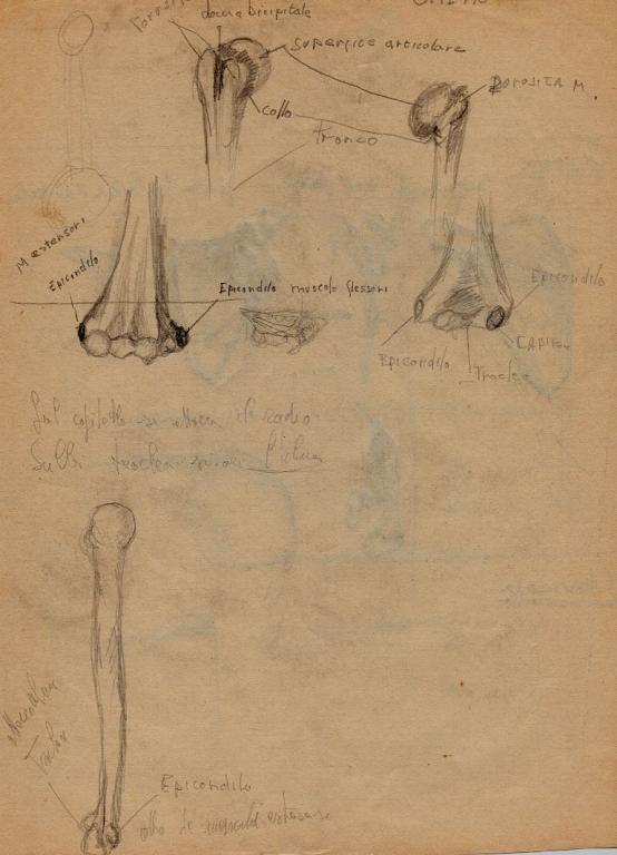 schizzi di anatomia 2 -clavicola- - daniele Rallo  - matita -  €