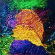 A volte le parole non bastano ed allora servono i colori 3  - Carla Colombo - Acrilico - 800 €