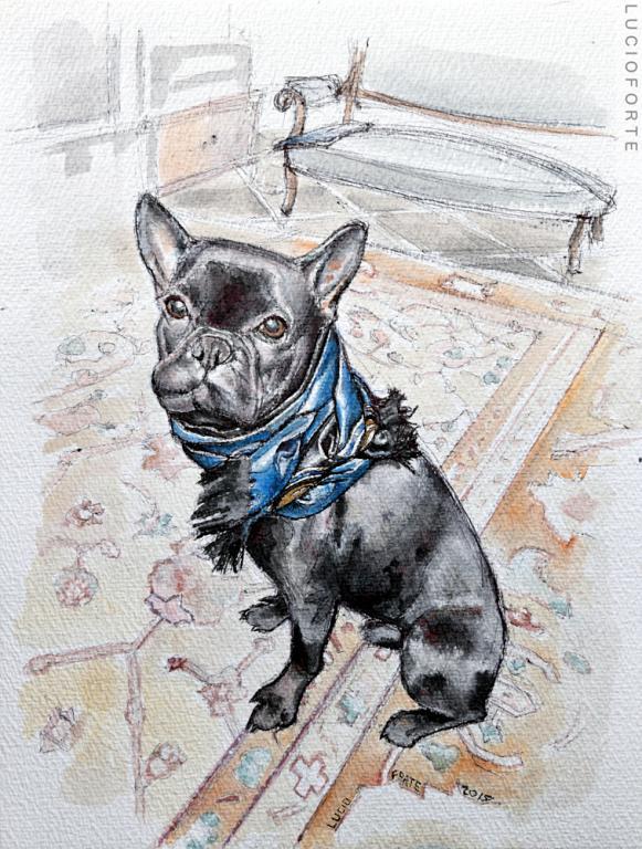 French Bulldog - Lucio Forte - Acquerello -  €