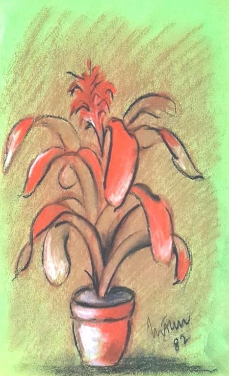 aechmea fasciata - mario fanconi - Pastelli