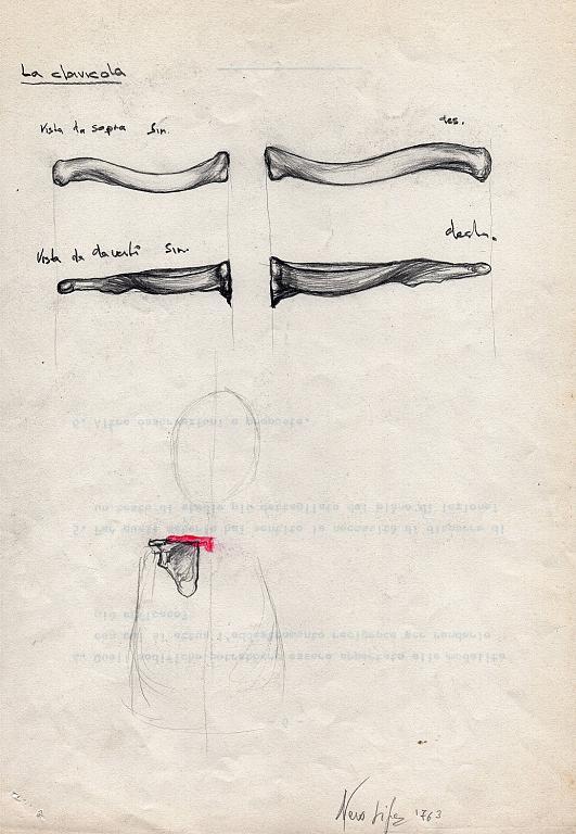 studi  anatomici - la clavicola- - daniele Rallo  - Pastelli - 50 €