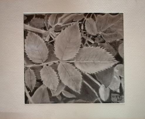 Foglie e foglie - Caterina Martinetto - Grafite - 35,00 €