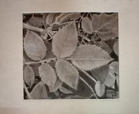 Foglie e foglie - Caterina Martinetto - Grafite - 35,00€